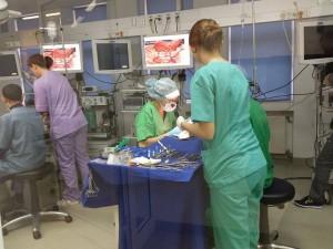 operatii porci