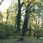 Arboretumul Bazos 1