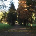 Arboretumul Bazos 2