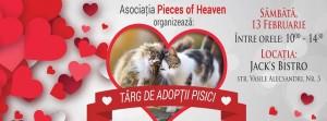 targ adoptii pisici