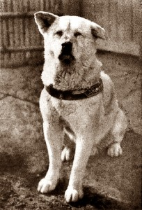 Hachiko 1935
