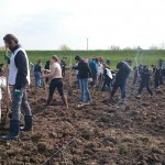 plantare copaci voluntari (13)
