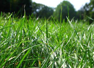 iarba verde
