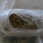 cannabis moravita (1)