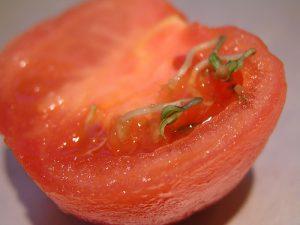 rosie-seminte-incoltite