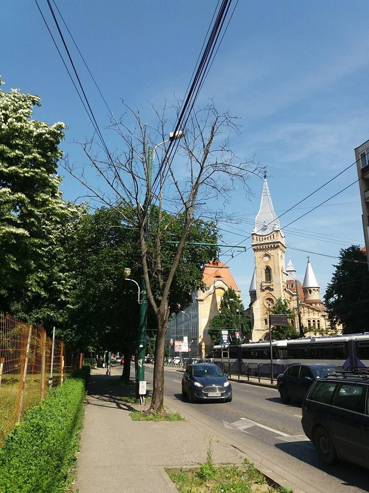 copaci-uscati-1